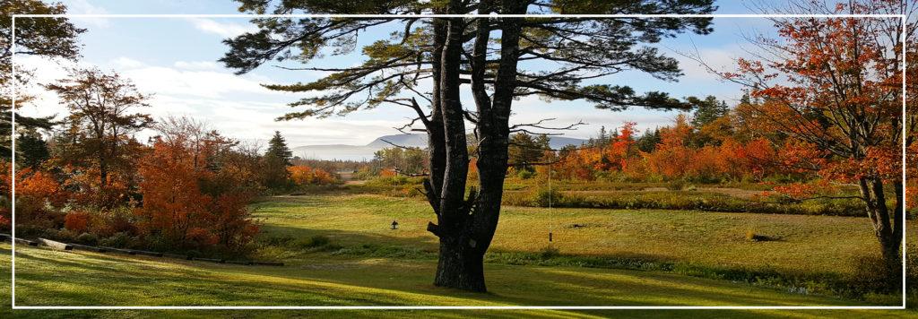 20 Acre Woods BnB Ingonish